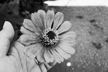 꽃안에 꽃이 피다