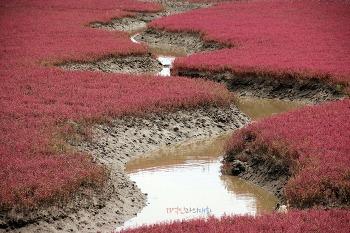 [음식 기행-29] 붉은 바다, 푸른 초원에서 한여름을 날려버리자
