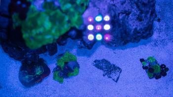 해수어항 준비 #29 산호에 중독됐습니다