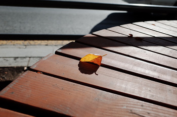 낙엽... 그리고 외로움