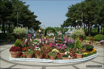 <대전>한밭수목원 장미원에 다녀왔어요