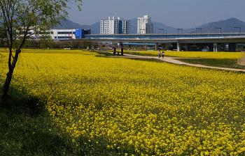 봄날은 가고