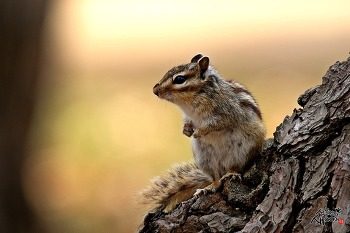 귀요미 다람쥐
