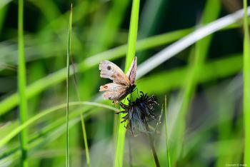 나는 나비