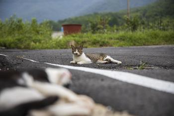 길고양이, 멀리 가지 않는 길고양이