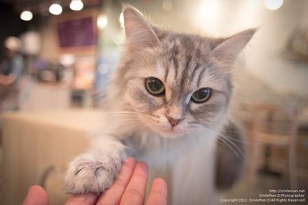 120922 구월동 도도한고양이