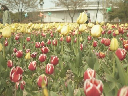 울산여행지 : 울산대공원 튤립 축제