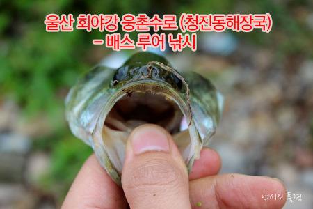 울산 회야강 웅촌수로 (청진동해장국) - 배스 루어 낚시