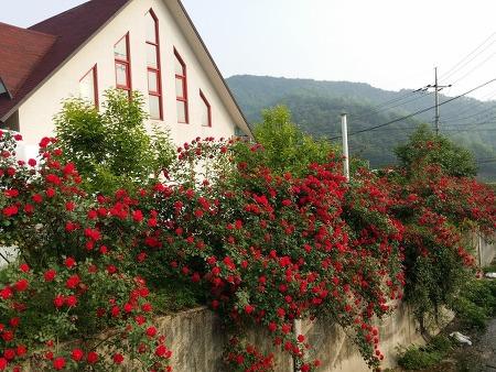 장미꽃이 아름다운 집