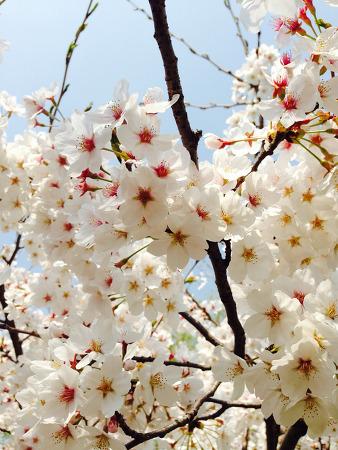 봄이 그립다