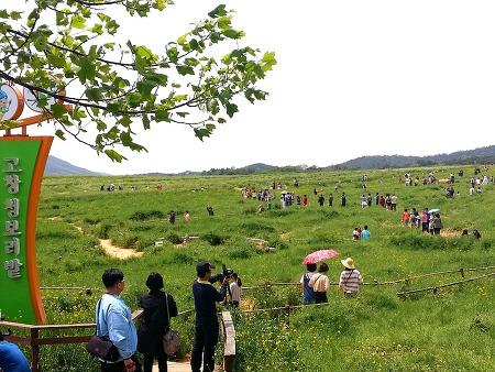 [전북고창여행] 고창 학원농장 청보리밭 축제