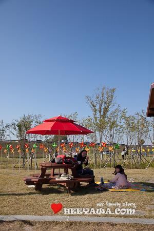 낙동강변 국화축제