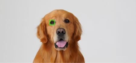 Alpha 6400, 업그레이드된 AI 펌웨어로 이제 동물의 눈까지 포착하다.