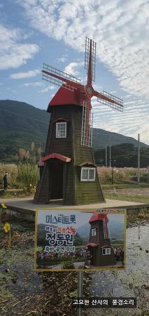 가을여행, 울산 태화강 국가 정원과 북천 코스모스 축제 현장