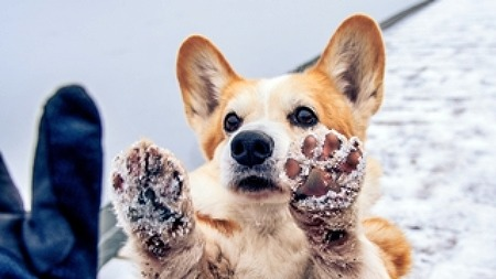 겨울철,  강아지 동상 대처법!