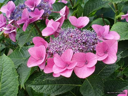 겸손하고 배려 깊은 꽃
