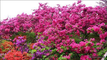<전주><봄꽃여행> 전주 완산 공원 - 꽃 동산 다녀왔습니다
