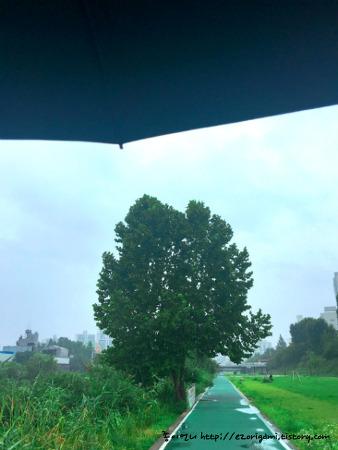 비오는날 동네 하천변에서 만난 신기한 동물 ㅎㅎ