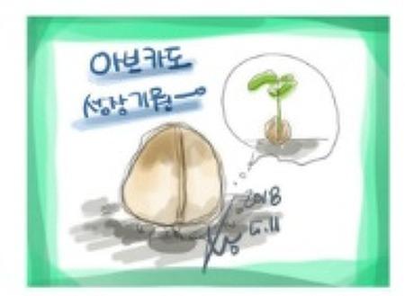 2018.05.11 아보카도 꿈나무