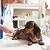 아픈 우리 강아지, 병원비가 걱정이라면? 비문 사진으로 가입하는 프로미 반려동물보험
