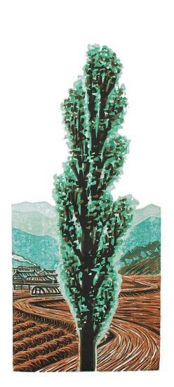 이윤엽 - 미루나무
