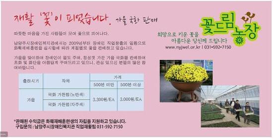 가을국화판매-꽃드림농장 남양주시장애인복지관