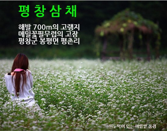 평창삼채 농원 소개, 해발 700m 고랭지 삼채농원, 메밀꽃 필 무렵의 고장