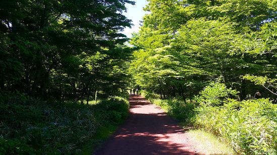피톤치드 가득, 에코힐링 체험 '사려니숲길'