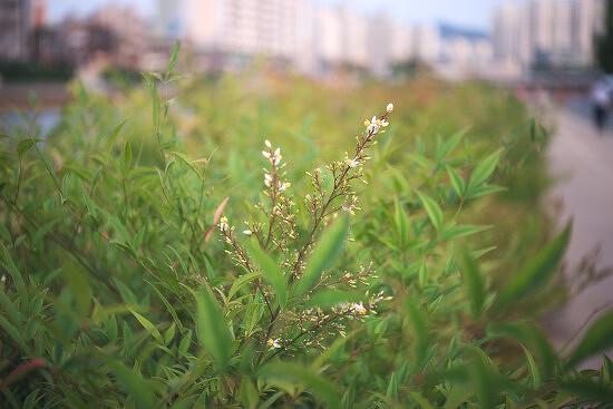 인더스타 50mm f3.5 렌즈로 찍은 예제 사진들.