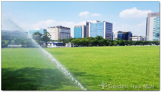 성남 분당구청 잔디광장 조경관수