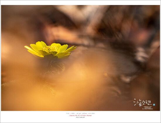 봄 향기를 미리 맡아 볼 수 있는 홍릉수목원
