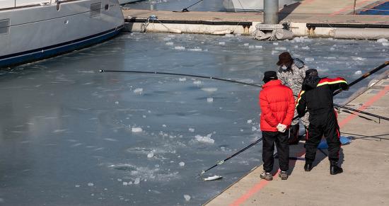 전곡항 강추위에 바다에서 얼어죽은 숭어