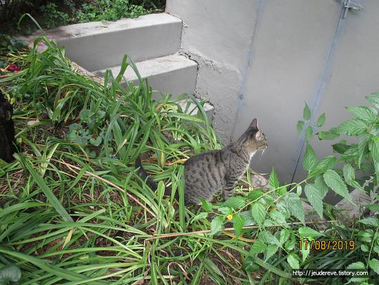 어미 고양이와 새끼 고양이, 반갑구나~