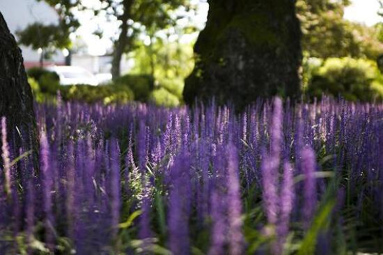 성주성밖숲