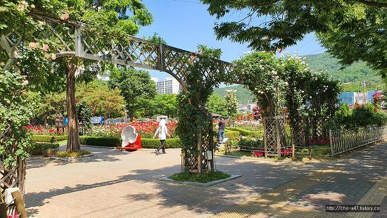 장미꽃 필무렵(대구이곡장미공원)