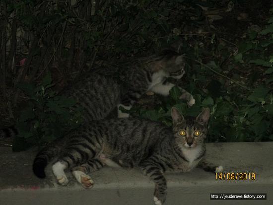 아파트에 새로운 새끼 길고양이들 등장!