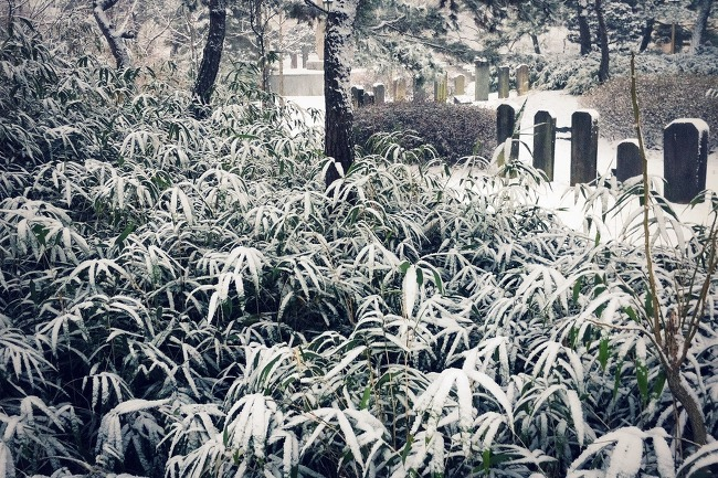 올해는 대구에도 눈이 참 많이 왔네요...