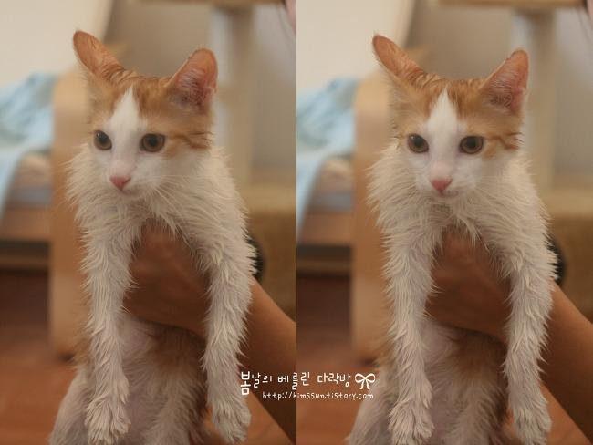 (두부양) 고양이, 따사로운 햇볕 아래 넉다운이 되다!