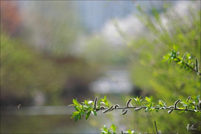 지난 4월에 사진 몇 장 - 펜탁스 istD + 슈퍼타쿠마 105/2.8