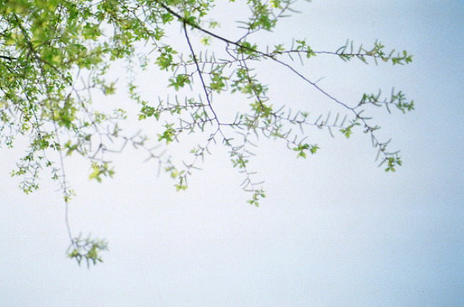 봄은 또 오고 꽃은 피고 또 지고 피고 ♪