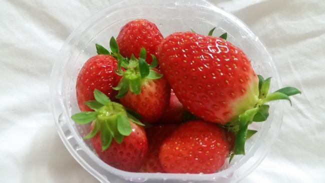 오늘도 딸기 ㅎ 연유딸기 맛있어^^