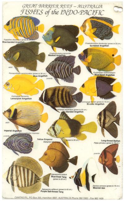 호주 대보초 물고기 간이도감