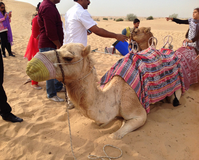 두바이 자유여행_둘째날, 맛집과 신기방기 사막투어(사파리투어)