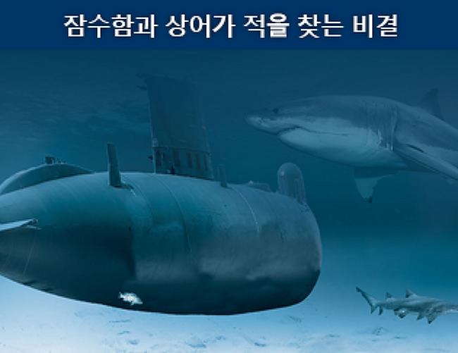 어두운 바다 속도 문제 없다! 잠수함과 상어가 적을 찾는 비결은!?