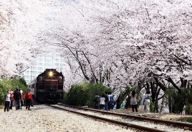[삼성물산] 때늦은 봄 꽃 구경? 아직 늦지 않았어요!