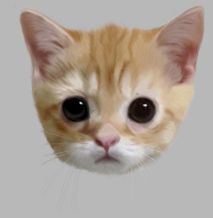 11번째 작품, 고양이