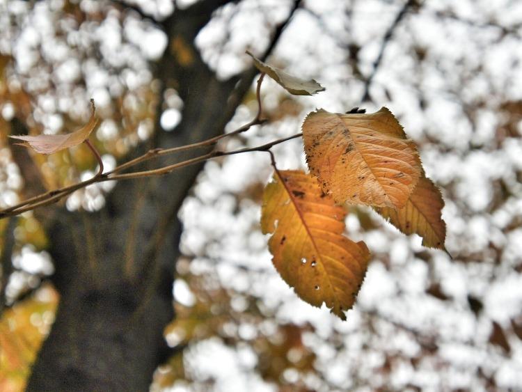#YJSHOT 너무 빨리 지나가는 듯한 가을.