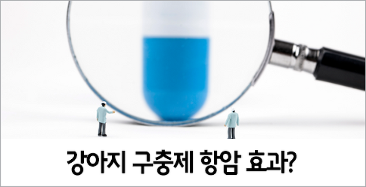 """강아지 구충제, 항암 효과 """"기대하지 말아야"""""""