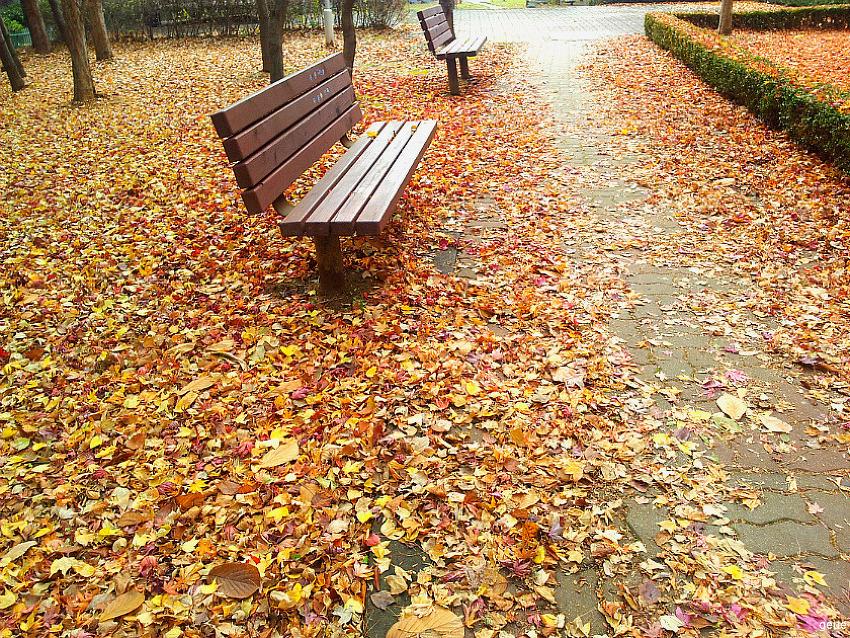[시] 낙엽 - 레미 드 구르몽