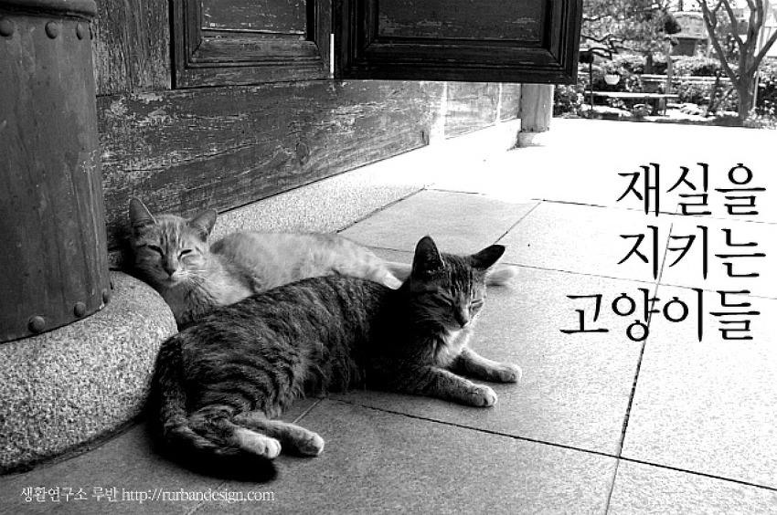 대전 민씨 재실을 지키는 고양이들과의  묘(妙)하고 묘(猫)한 인연+23마리 새끼고양이
